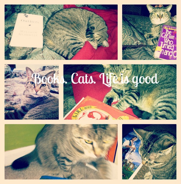 catCollage2