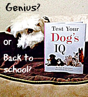 Just for Fun: Test Your Dog's IQ