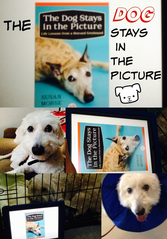 The Dog Stays in the Picture by Susan Morse
